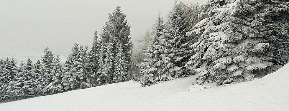 Winter Auswahl